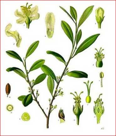 geschlechtsorgan der pflanze